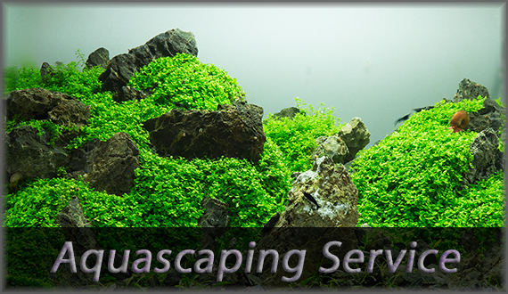 Unser Aquascaping Service