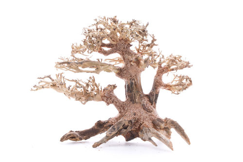 Bonsai Baum Small