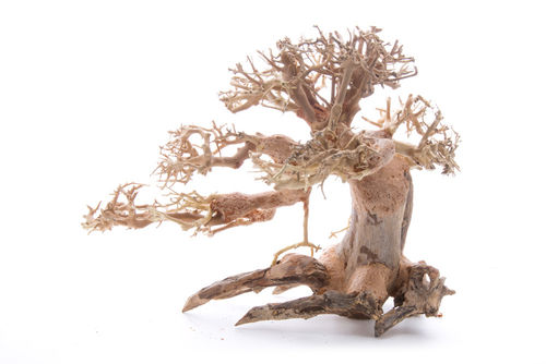 Bonsai Baum Medium