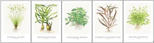 Tropica Art Cards Set 1 - 13x18cm