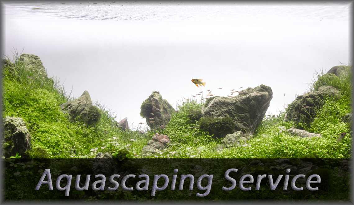 Aquascaping-Service